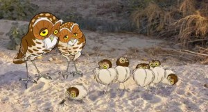 hidden life of the burrowing owl