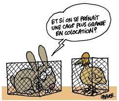 Charlie Hebdo et les droits des animaux : un engagement qui s'écrit  toujours au présent - Cause animale - Wamiz